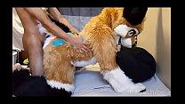 FreyaShibe - Doggy Fun